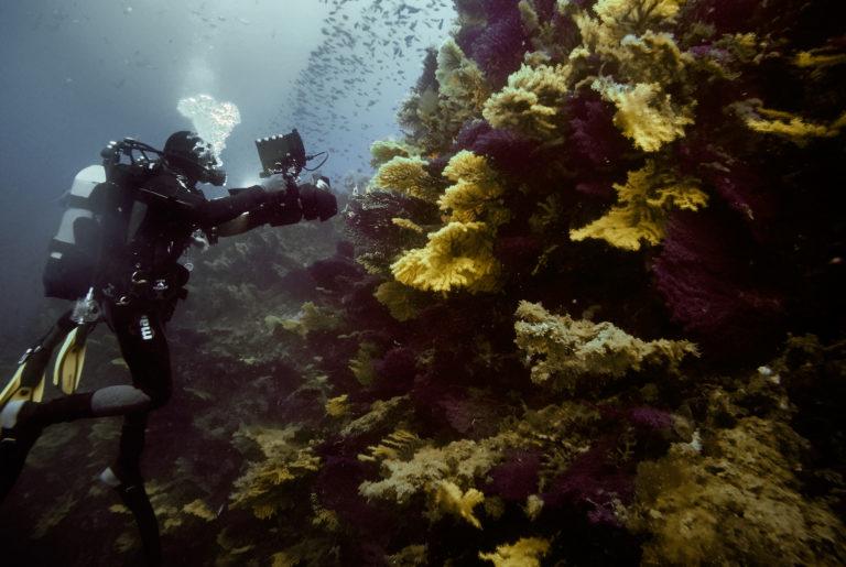 flavio_oliva_underwater_cinematography_05