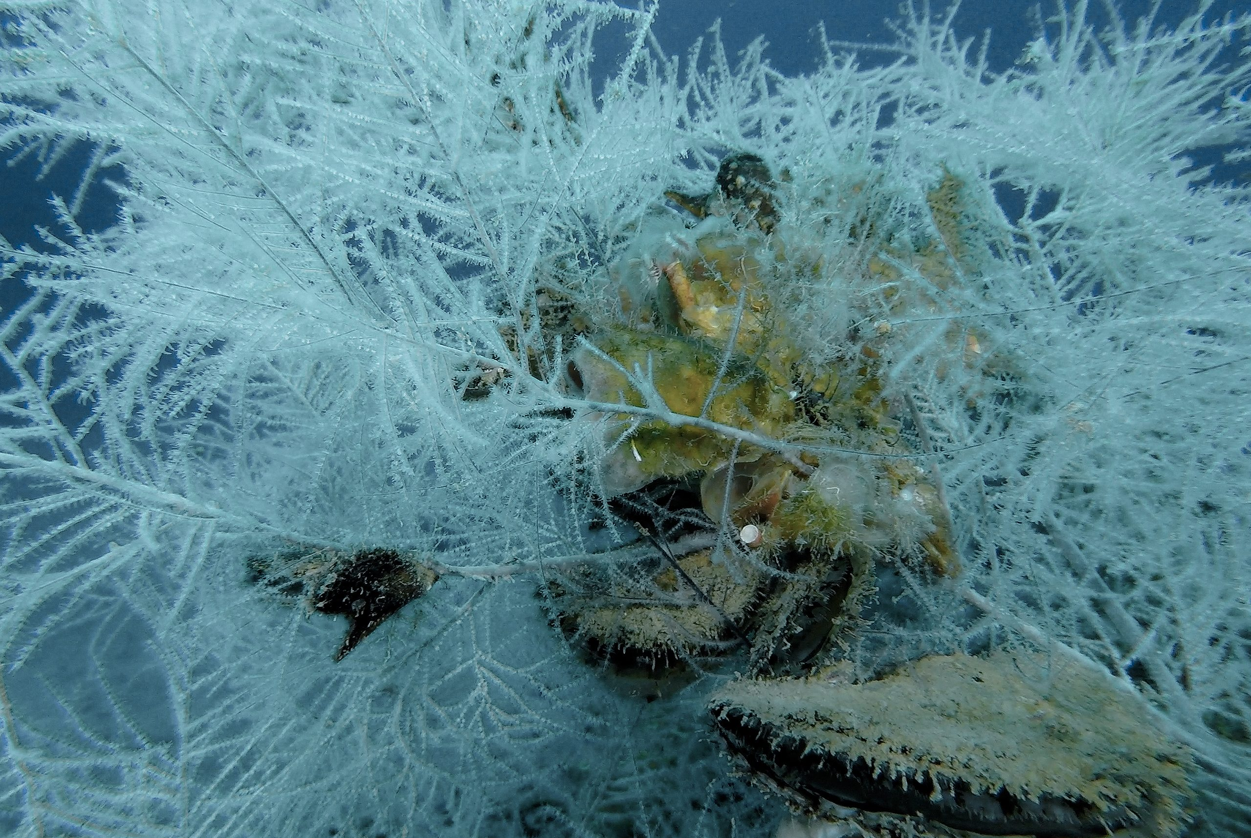 black_coral_national_geographic_01